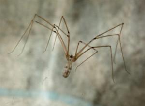 избавиться от пауков в квартире