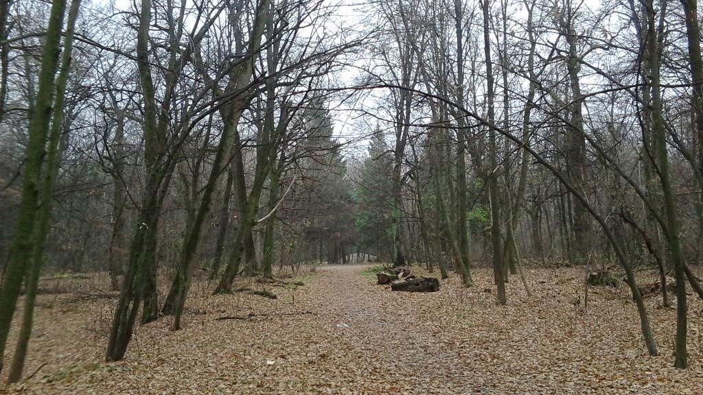 лес парк